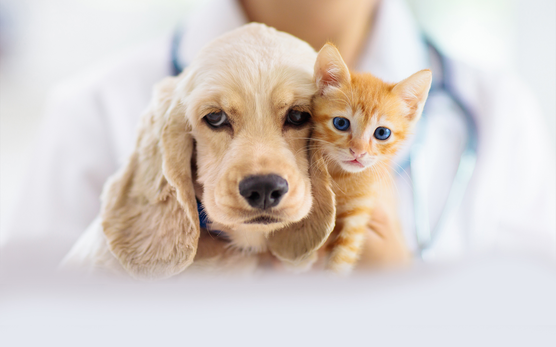 https://www.mypetshealth.ca/sites/camhp3/files/revslider/image/vet%202.1.jpg
