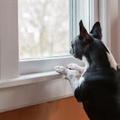 Stressful Situations for Cats and Dogs