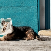 How do you take care of a pet who is sick or has had an operation?