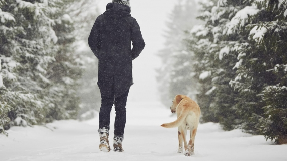 Winter activities with dog