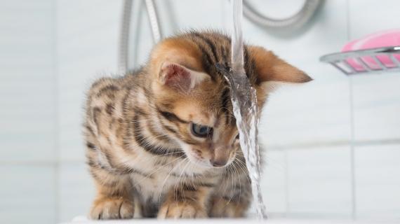 Comment laver mon chat?
