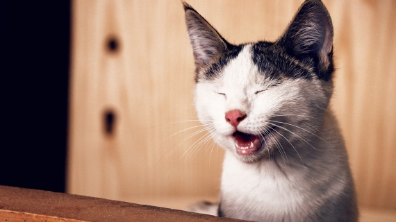 Why does my cat sneeze? Should I be worried?